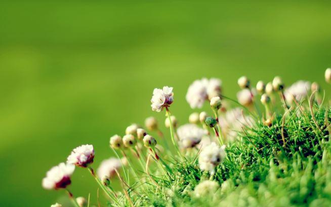 绿色花卉桌面壁纸高清护眼桌面壁纸